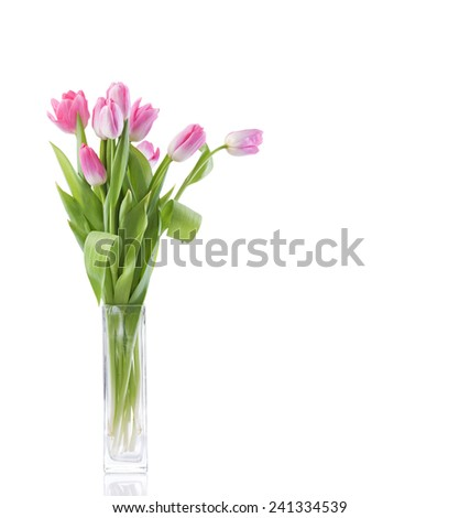 tulips flowers over white background  - stock photo