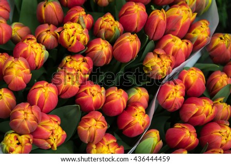 Tulips for sale in Amsterdam, Netherlands - stock photo