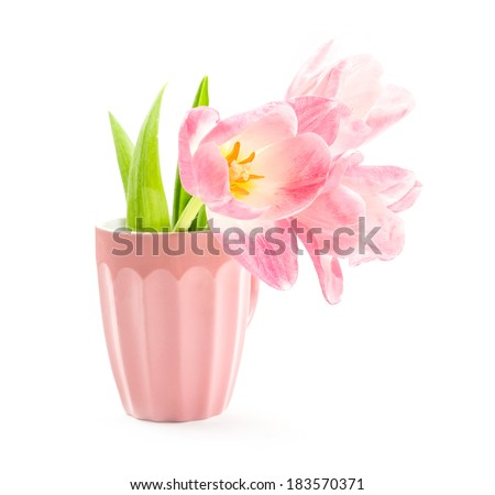 tulips in a vase isolated on white background  - stock photo