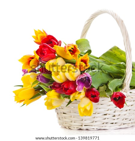 tulips in basket isolated on white background. colors - stock photo