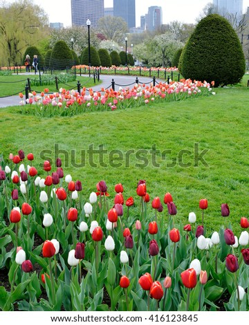 Tulips in Boston Public Garden - stock photo