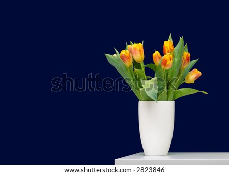 Tulips in deep blue - stock photo