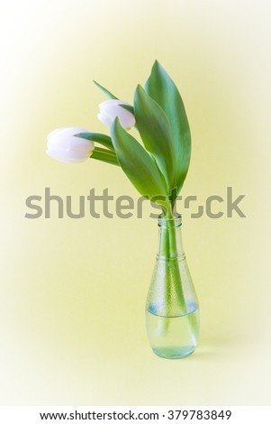 Tulips in glass vase on yellow background with vignette.