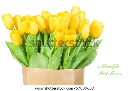 Tulips in paper bag against white background - stock photo