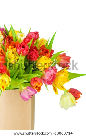 Tulips in paper bag isolated on white background - stock photo