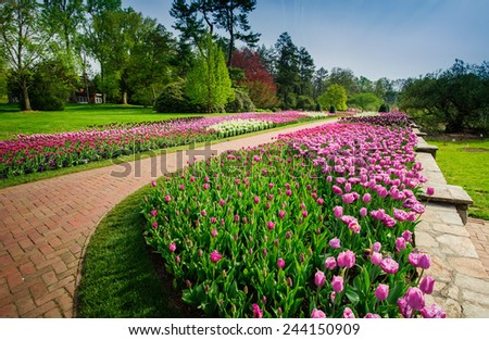 Tulips in the park - stock photo
