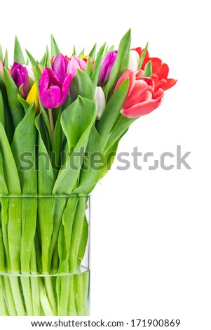 Tulips in the vase on white background - stock photo