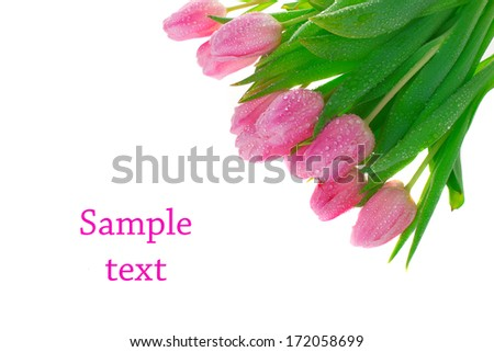 Tulips isolated over white with copy space - stock photo