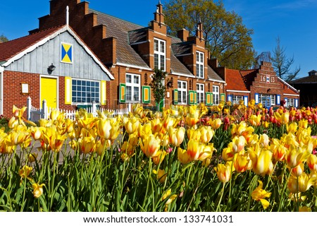 tulips line paths at Windmill Island Villiage in Holland Michigan. Tulips are in abundance during the annual Tulip Time Festival. The Dutch heritage is on display throughout the gardens. - stock photo