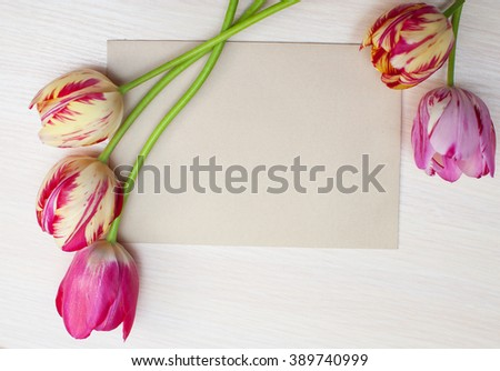 Tulips on a white background with space for text - stock photo