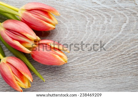 Tulips on a wooden surface. Studio photography. - stock photo