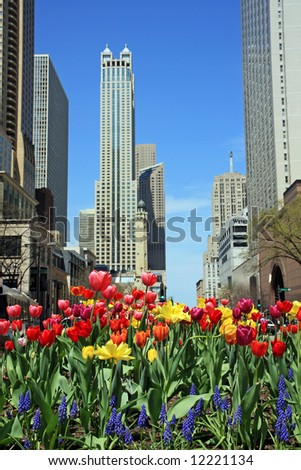 Tulips on Chicago's Michigan Avenue - stock photo