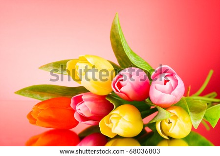 Tulips on red background - stock photo