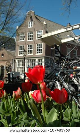 Tulips on the street of Amsterdam