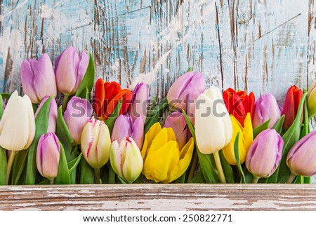 Tulips on wooden background, close-up. - stock photo
