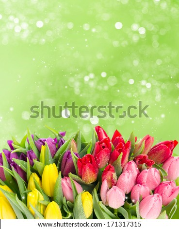 tulips over blurred green background. bouquet of fresh spring easter flowers with water drops