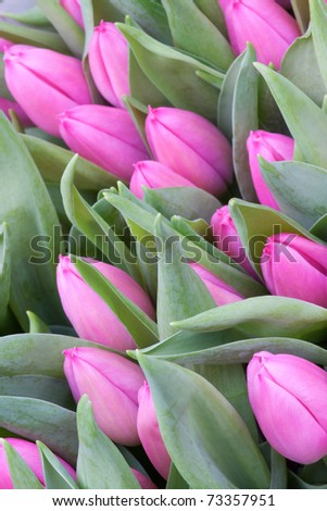 Tulips photographed at the famous flower market in Amsterdam, the Netherlands. - stock photo