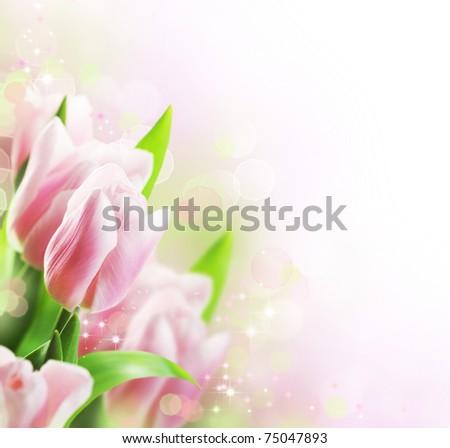 Tulips Spring border design - stock photo