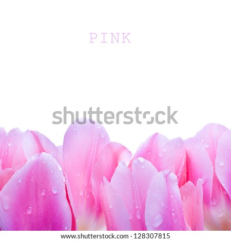 tulips  with drops of water. close-up isolated on a white background. - stock photo