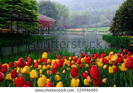Tulips with tree - stock photo