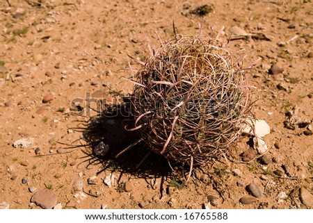 tumbleweed in the red desert - stock photo
