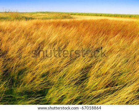 tundra landcape - stock photo