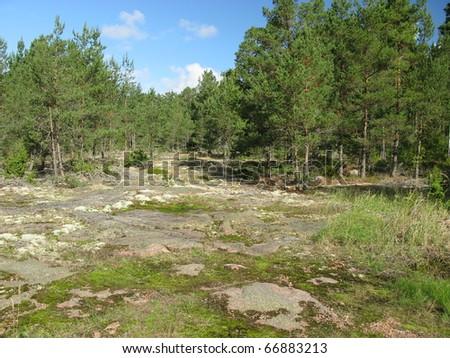 Tundra landscape - stock photo