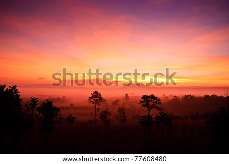 Tung Salang luang in Thailand - stock photo