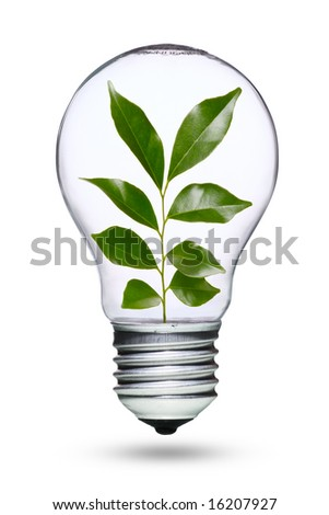 Tungsten light bulb with plant inside - stock photo