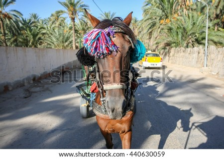 TUNIS, TUNISIA - SEPTEMBER 16, 2012 : A front view of a horse pulling a tourist carriage in the street of Tozeur, Tunisia.