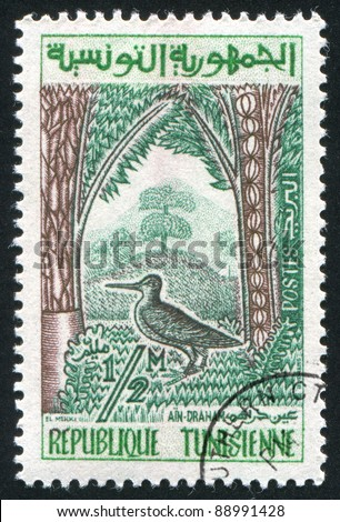 TUNISIA - CIRCA 1960: stamp printed by Tunisia, shows Woodcock in Ain-Draham forest, circa 1960