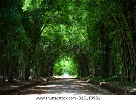 Tunnel bamboo trees - stock photo