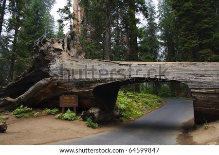 Tunnel Log at Sequoia National Park in California.