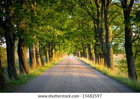 tunnel of green trees on sunlight - stock photo