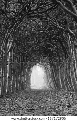 Tunnel of trees on an hazy, autumn day.