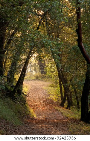 Tunnel through the forest at dusk, with hiking path - stock photo