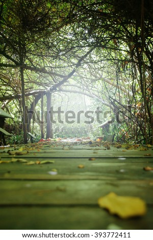 Tunnel trees and walkways, beautiful nature