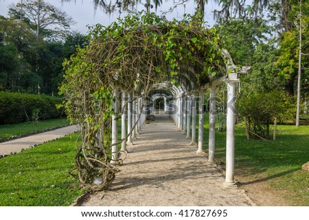 Tunnel with creeper in the Botanical Gardens of Rio de Janeiro, Brazil