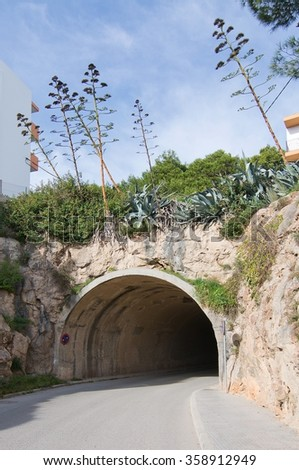 Tunnel with vegetation overhead in Ibiza, Balearic islands, Spain