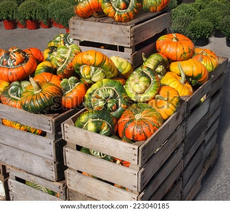 Turban squash gourds, large, and variegated in orange and green color, are displayed for sale in large wooden crates at a farm in autumn. - stock photo