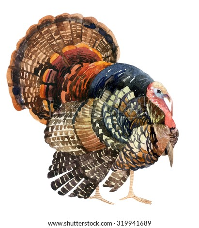 Turkey bird illustration. Watercolor turkey isolated on the white background - stock photo
