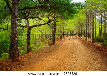 Turkish dirt road in the mountains in the summer between the pines - stock photo