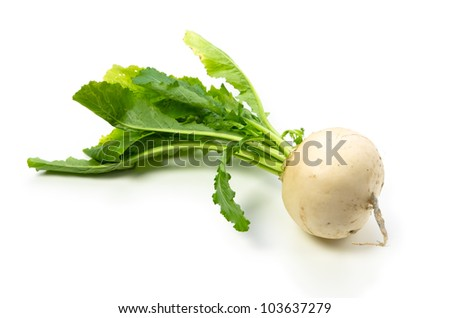 turnip - stock photo