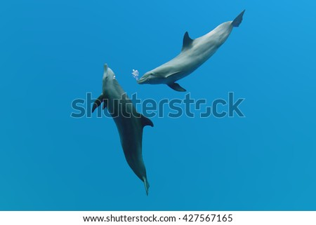 tursiop dolphins playing in the blue sky background