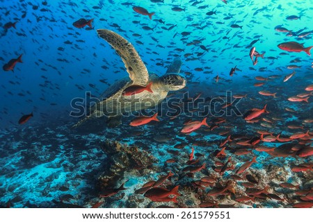 Turtle and tons of Fish