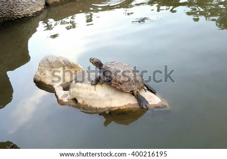 Turtle at the park
