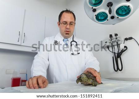 Turtle at veterinarian - stock photo