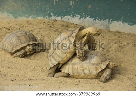 Turtle breeding