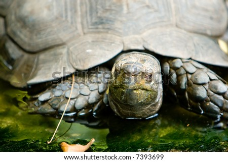 Turtle Close-up. Very shallow depth of field. Focus on the eyes. - stock photo