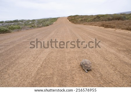 Turtle crawling along deserted dirt road - stock photo